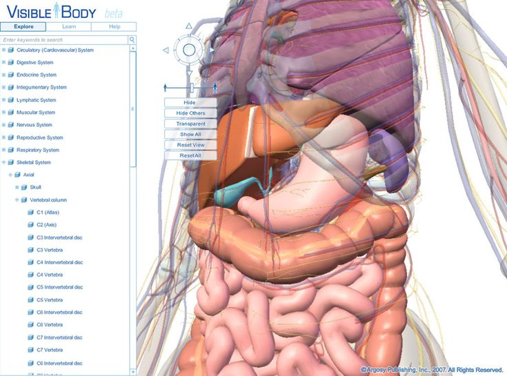 22 best anatomy of organs in body images on pinterest | human, Human Body