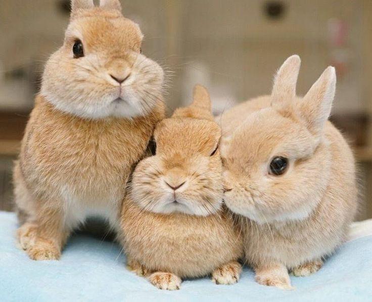 Фото с тремя зайцами