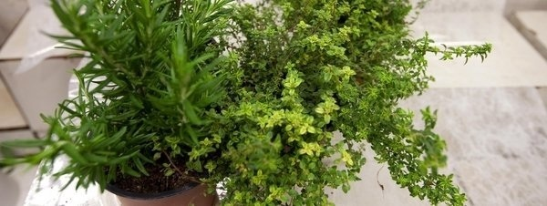 Aceites esenciales para combatir la astenia primaveral. http://www.farmaciafrancesa.com/main.asp?Familia=189=274=familia=1=223
