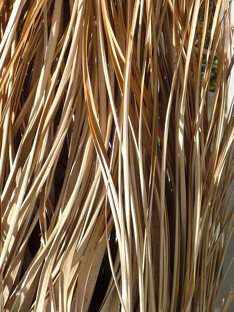 Dried palm fronds; tan, cream - More Great Ideas from