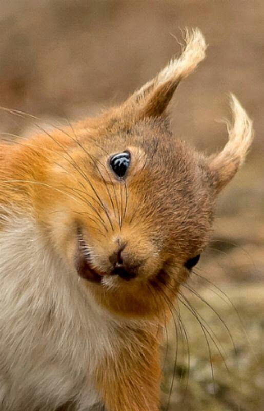 #Eichhörnchen #Süß lächelnd
