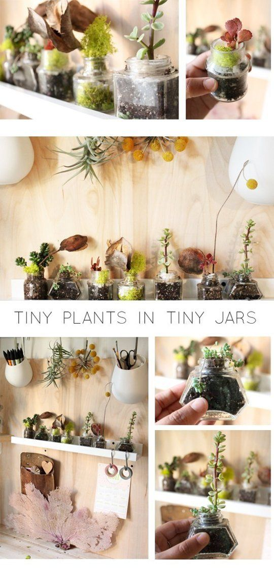 Tiny plants in ink jars make for a quirky little indoor container garden of sorts and fit easily on a shelf