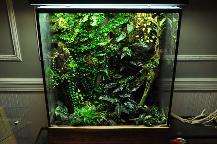 click the image to open in full size vivarium