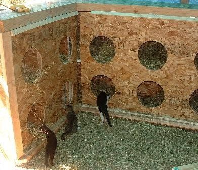 Feral Cat Shelter #feral #community #cats