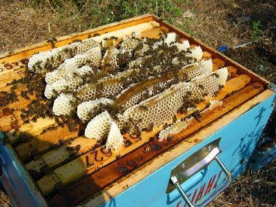 Ορεινή Μέλισσα: Πότε και πως βάζουμε πατώματα στα μελίσσια; Για να γεννά η βασίλισσα πάνω και κάτω ταυτόχρονα!