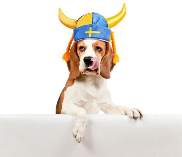 Nombres mitológicos para perros - ExpertoAnimal