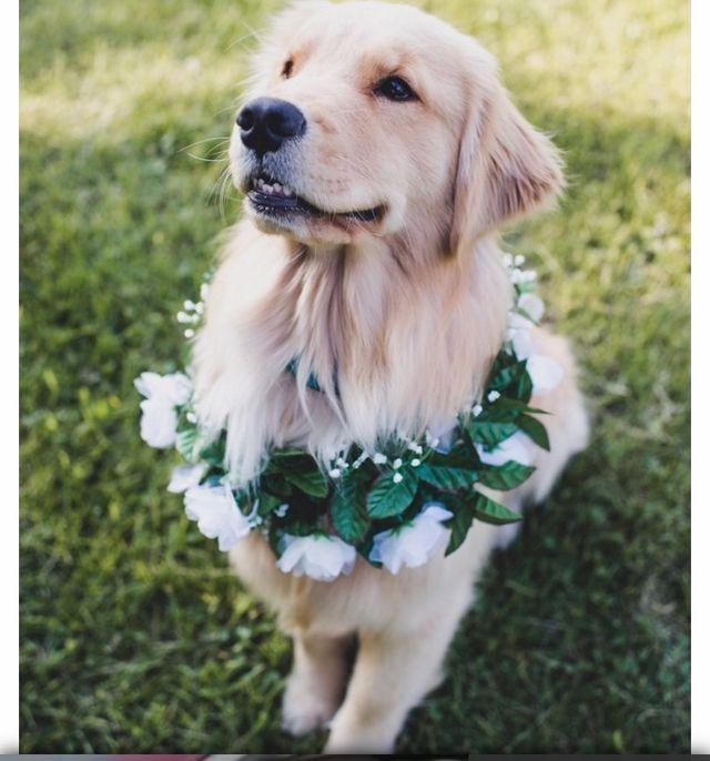 Julswonderland Dogs Dog Wedding Animals