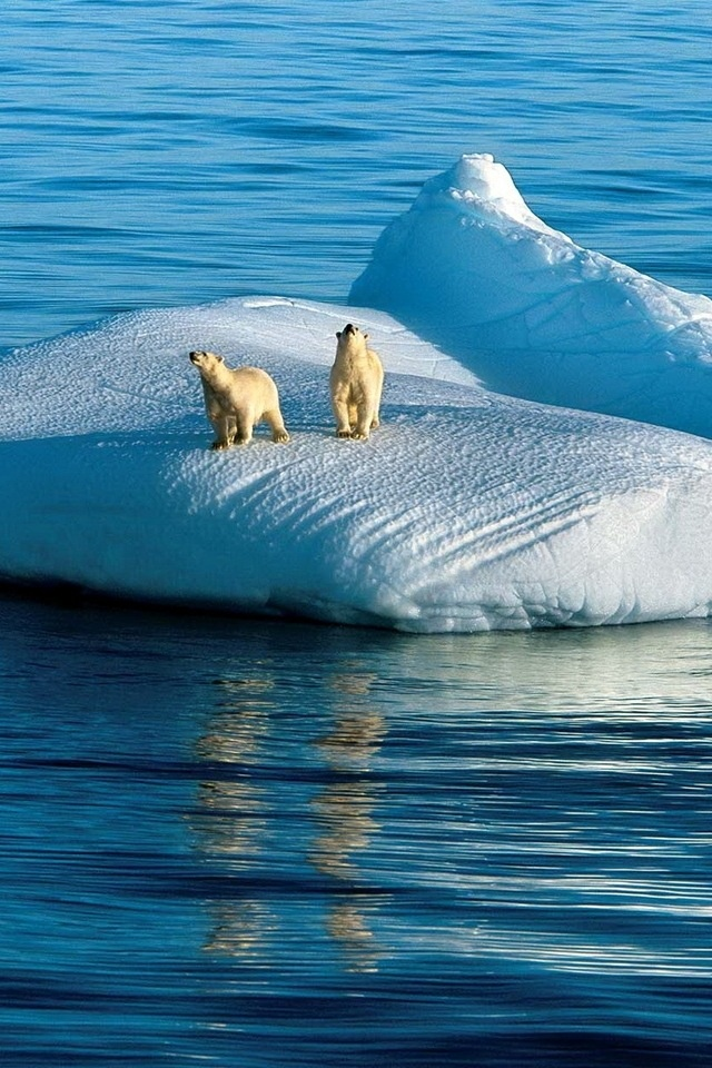 global warming affects polar bears No uncertain terms, global warming's effects on polar bears — and our planet   are its effects more visible than in the arctic, where the impacts of the climate.