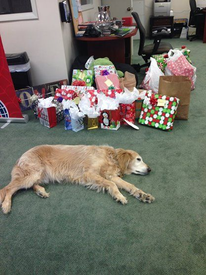 SEO Dog was exhausted from wrapping all the gifts that we had for a special family in Wheeling! He loves the annual Secret Santa mission!!