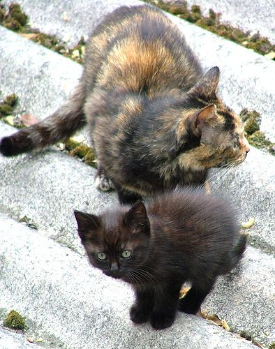 Stray mom and kitten in Brittany, France