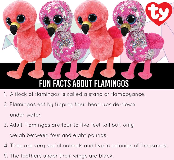 Fun Facts About Flamingos Ty Flippables Gilda Flamingo