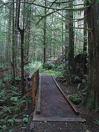 Rainforest trails near Campbell River