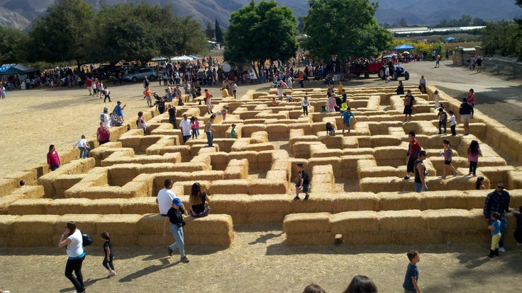 Faulkner Farm Pumpkin Patch hay maze http://www.conejovalleyguide.com/welcome/the-pumpkin-chucker-at-the-pumpkin-patch-at-faulkner-farm-in.html