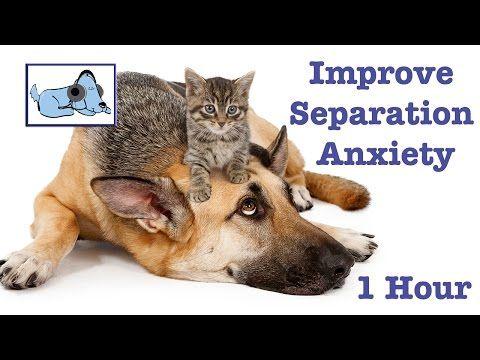 1 heure de la musique pour les chiens et chiots. Améliorer l'anxiété de séparation. - YouTube