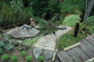NZ native plants on a steep site