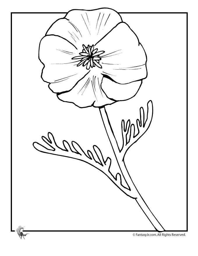 265 best flower pic images on Pinterest | Printable coloring ...