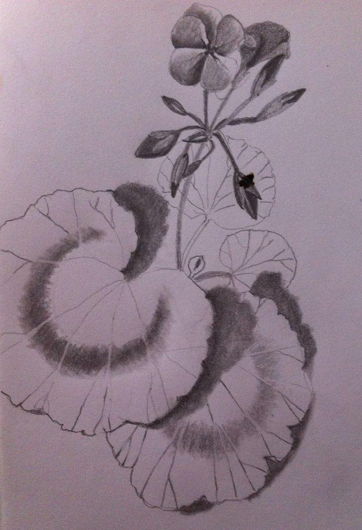 Day 16....study of a leaf