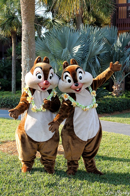 Cartoon Characters Kahoot : Best chip and dale for fun images on pinterest