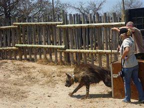 Moholoholo Wildlife Rehabilitation Centre Mpumalanga