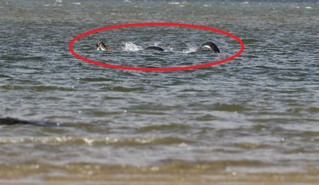 Man Snaps Convincing Photo Of The Loch Ness Monster