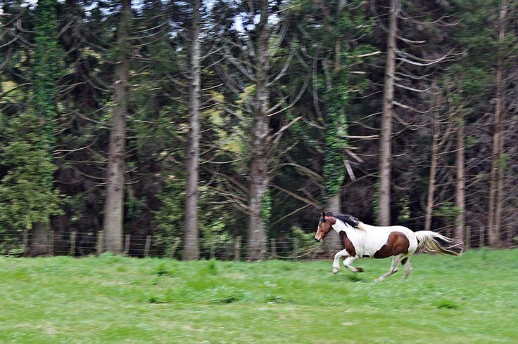 Equine Trader Vetpro Photo of the Week entrant - Rhianne Corlett