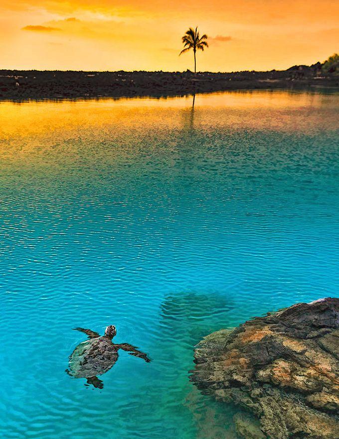 Sunset at Kiholo Bay, Big Island of Hawaii www.facebook.com/loveswish