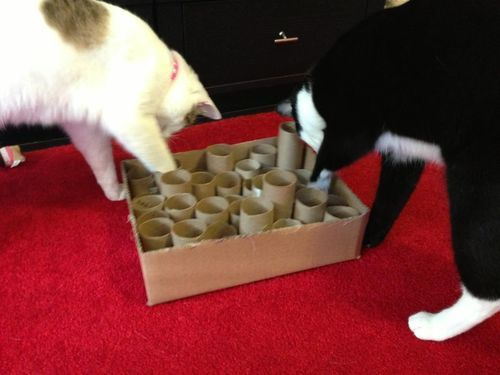 Have you ever made toys for your cats? if so, what have you made? Any photos?    I am in the...