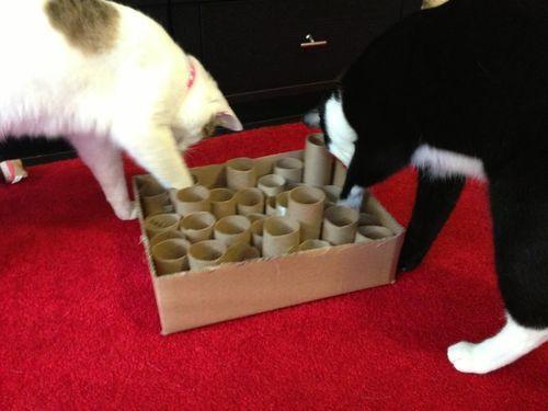 Home-Made Cat toys <3  https://www.pinterest.com/keymail22/animal-lovers/ <3 https://player.vimeo.com/video/113793930?autoplay=1   http://www.pinterest.com/keymail22