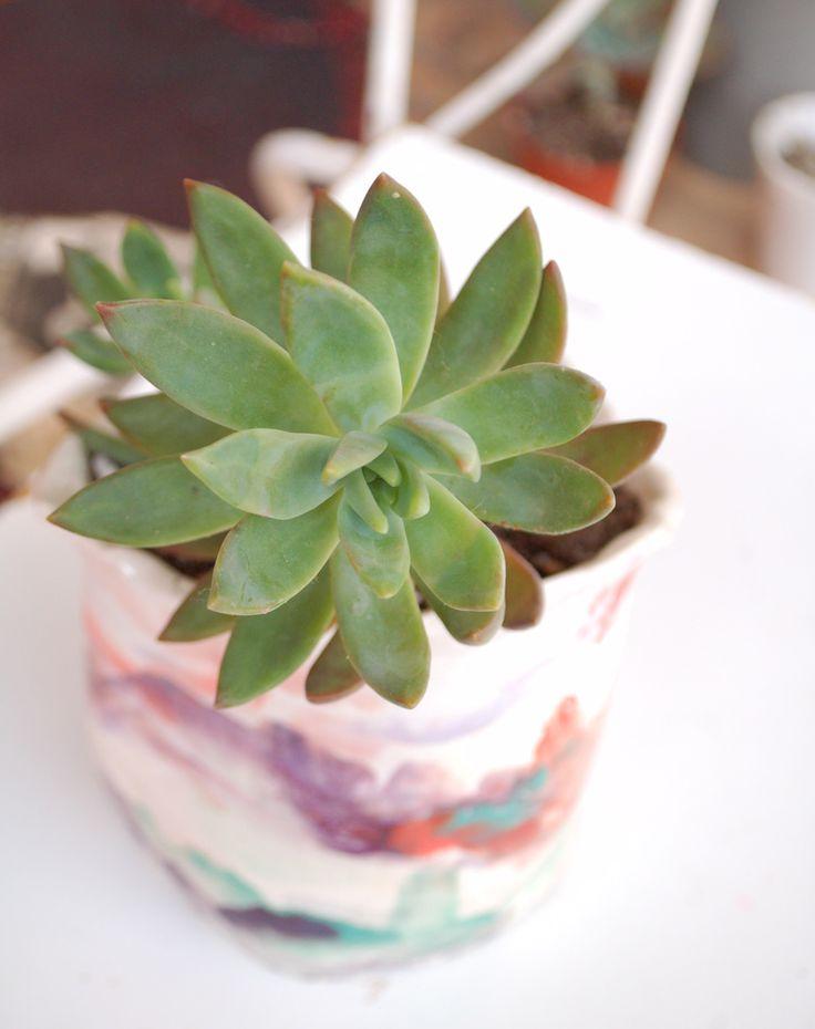 Succulent... name anyone?
