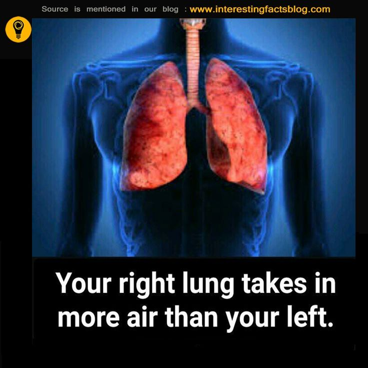 right lung takes more air