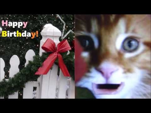 Happy Birthday Message for you - Birthday Cat Pictures Animation Video