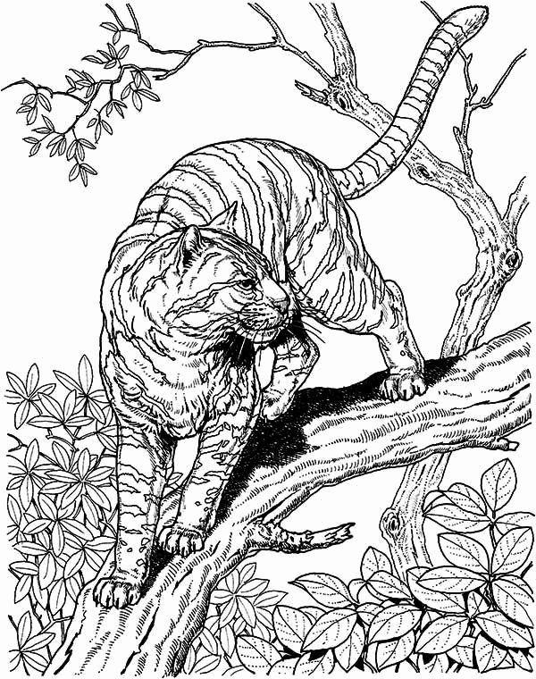 Big Cat Coloring Pages Cat Coloring Page Lion Coloring Pages Cat Coloring Book