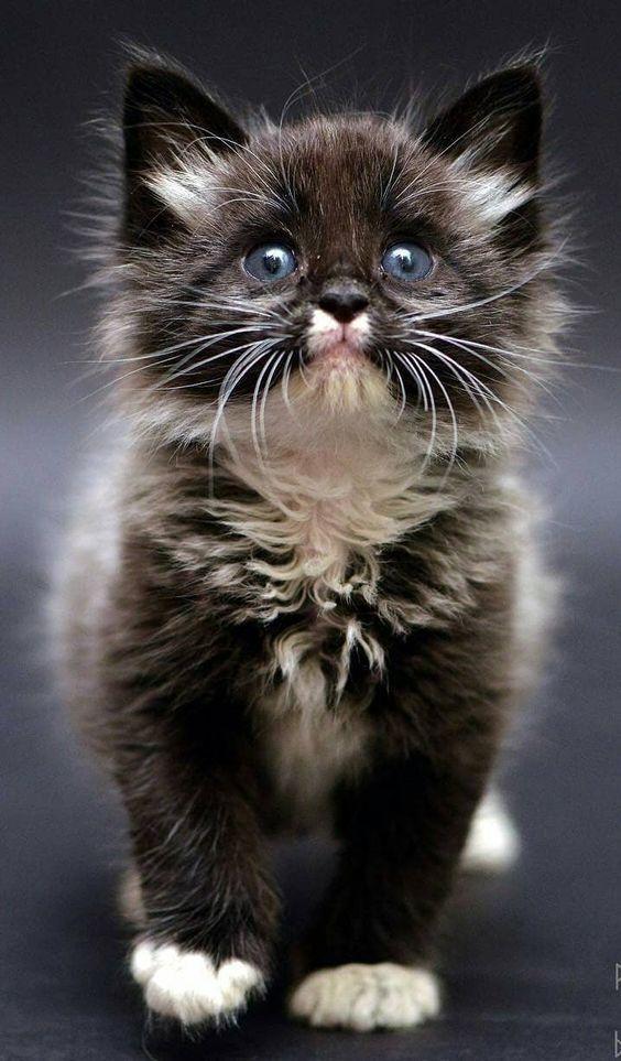 Amour de chat 🧡 chats calin –      Chats et chatons- chaton mignon -bébé ch…