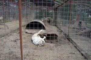 [>A zoo was recently brought to justice for its horrific conditions and animal abuse.++ Praise the Animal Legal Defense Fund for bringing a lawsuit against Cricket Hollow Zoo. SIGN TO PRAISE SUCCESS OF LAWSUIT! ANIMAL PETITIONS.