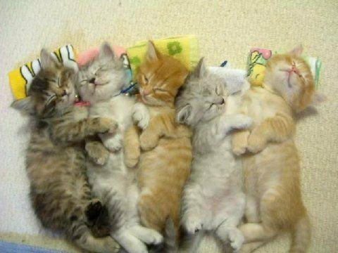 snuggly kittens!