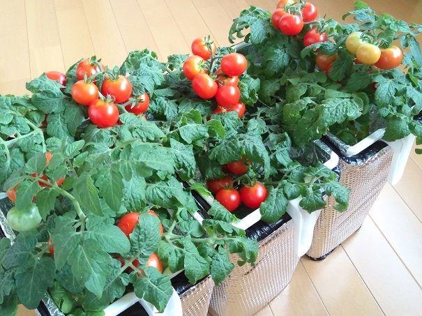100均で水耕栽培容器の作り方 深底 セリア編 水耕栽培 野菜