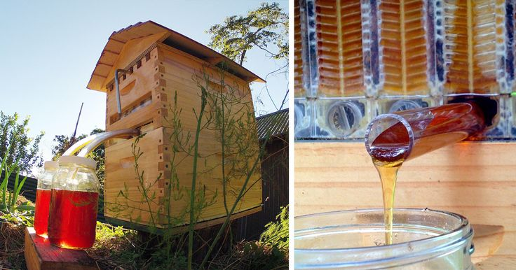 With this brilliant invention by Stuart and Cedar Anderson, a father-and-son beekeeper team in Australia, honey bees around the world can breathe a collective sigh of relief. Their Flow Hive invention allows beekeepers to harvest honey from their hives without disturbing the bees inside.