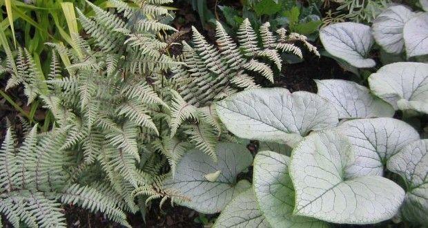 3 plantas perennes de sombra que brillan en primavera
