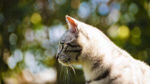 Beautiful Cat HD Wallpaper