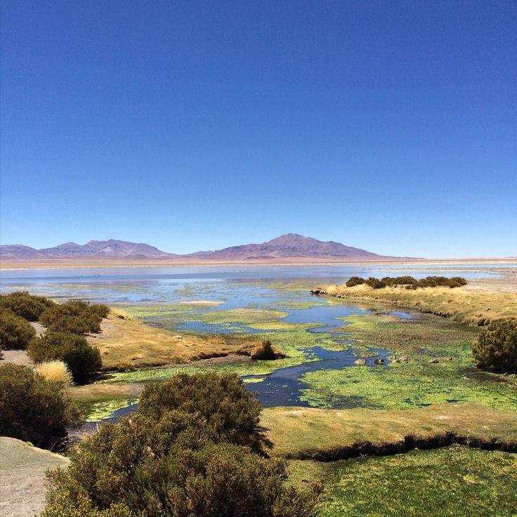 Salar de Tara, Atacama Desert - Chile