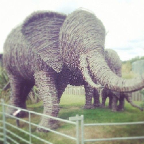 #wicker#elephant#zoo#family#garden#art - @Tracy Holt