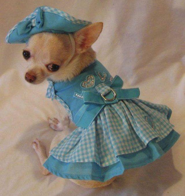 92 Best Dog Clothes Images On Pinterest Dog Clothing Dog Apparel