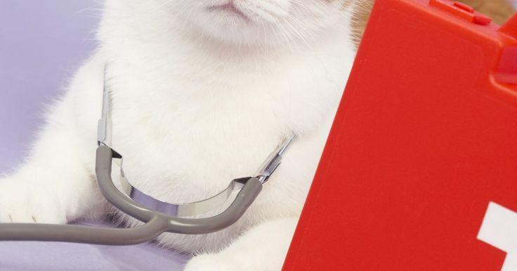Sintomas de uma infecção em gatos. Gatos são mestres em mascarar doenças, e sintomas perceptíveis muitas vezes não aparecem até que os felinos estejam muito doentes. Saber e reconhecer quais são os sintomas de uma infecção em gatos pode significar a diferença entre a vida e a morte para os animais domésticos.