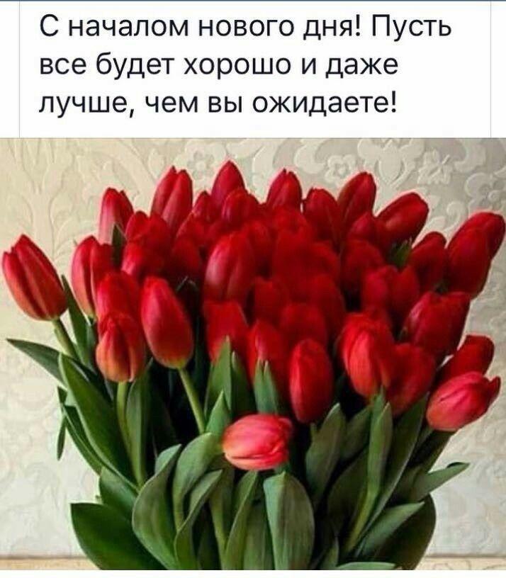 pozdravlenie-s-nachalom-dnya-otkritki foto 18