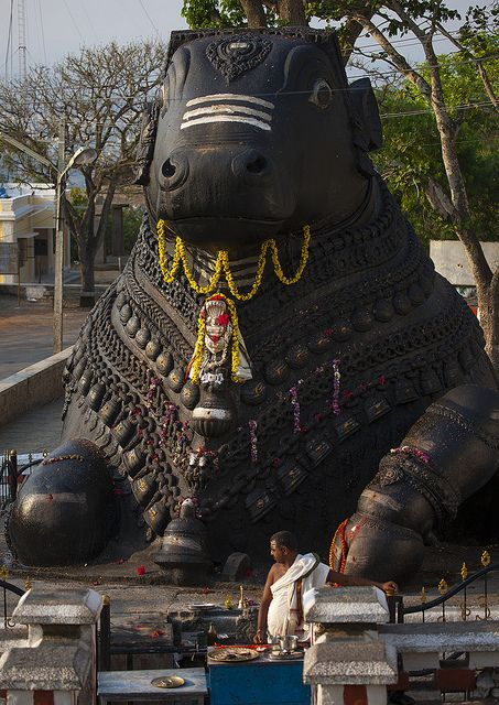 .Nandi Bull of Lord Shiva (A giant granite carving, halfway to the top of Chamundi Hills, Mysore, Karnataka, India).