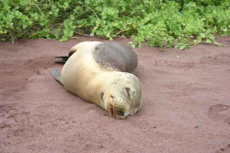 Siesta time! The Galapagos, Ecuador