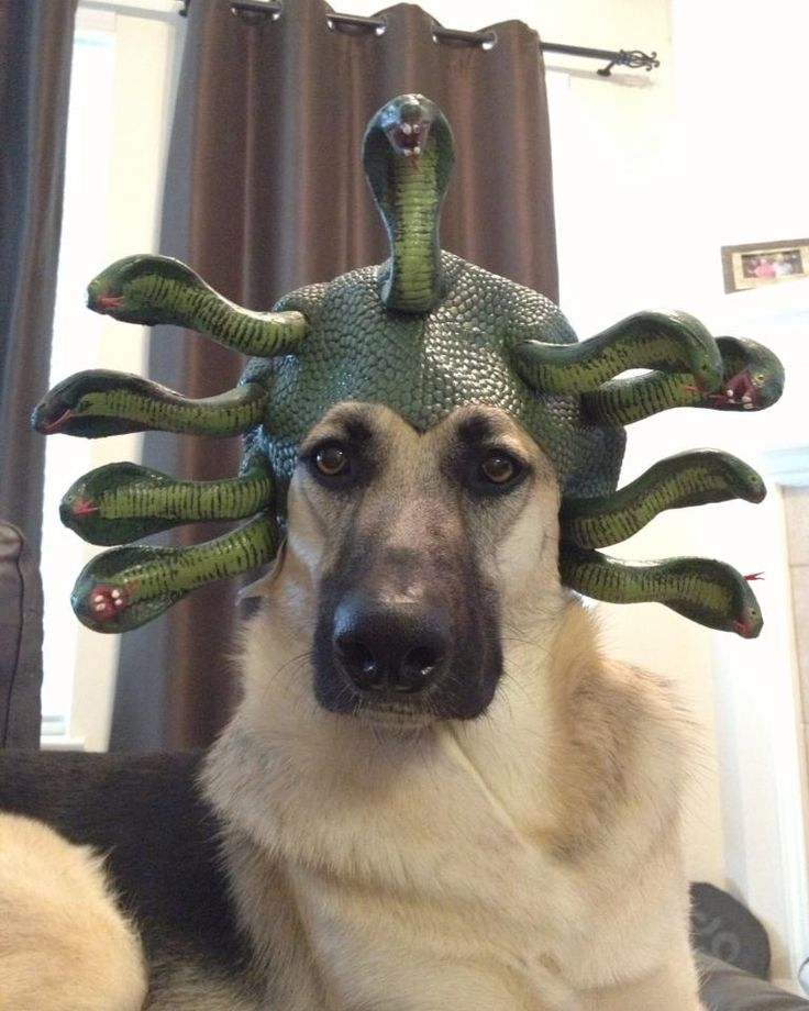 23 Best Images About Silly Hat Things On Pinterest: 15 Best Pet Costumes Images On Pinterest