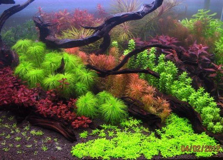 #plantedaqaurium #aquarium #plantedtank #aquascape #Exoticaquaristic