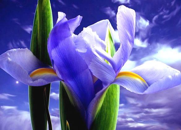 Belas orquídeas roxas com fundo de céu azul