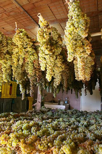 ♔ Greve in Chianti in Toscana - getting ready to make the wine